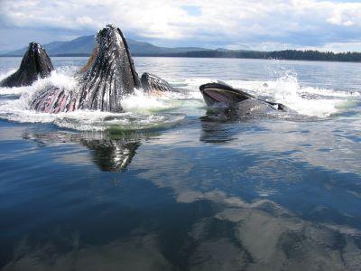Описание и снимки на пристанище Джуно (Аляска), САЩ от круизен маршрут