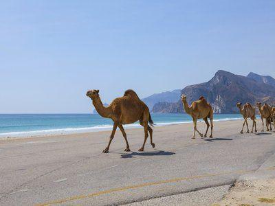 Описание и снимки на пристанище Салалах, Оман от круизен маршрут