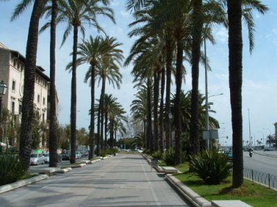 Описание и снимки на пристанище Палма де Майорка, Испания от круизен маршрут