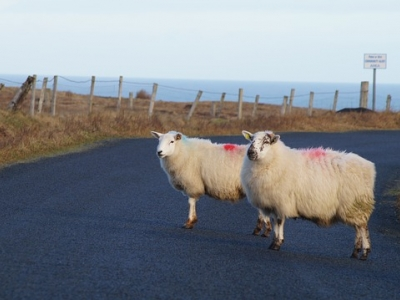 Описание и снимки на пристанище Донигал, Ирландия от круизен маршрут