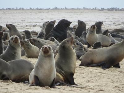 Описание и снимки на пристанище Уолфиш Бей, Намибия от круизен маршрут