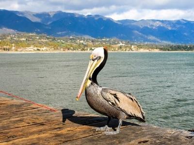 Описание и снимки на пристанище Санта Барбара, САЩ от круизен маршрут
