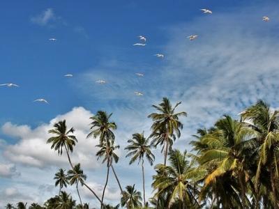 Описание и снимки на пристанище Хамбантота , Шри Ланка от круизен маршрут