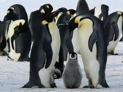 Описание и снимки на пристанище Антарктида, Антарктика от круизен маршрут