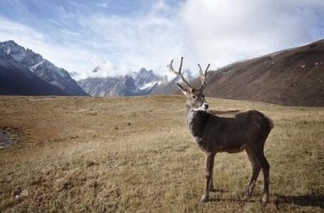 7 дни Приказни дни в Аляска