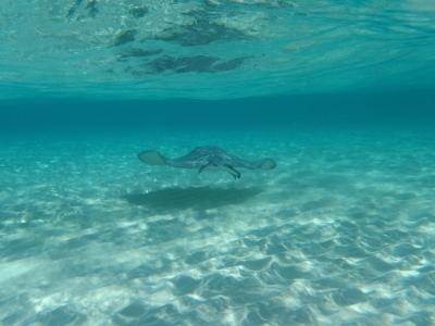 Описание и снимки на пристанище Голям Кайман, Каймановите острови от круизен маршрут