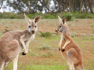 Описание и снимки на пристанище Каирнс (Австралия), Австралия от круизен маршрут