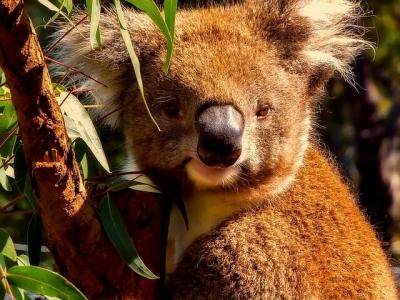 Описание и снимки на пристанище Хобарт (Австралия), Австралия от круизен маршрут