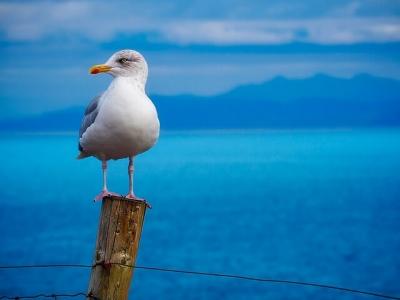 Описание и снимки на пристанище Нукуалофа (Тонга), Тонга от круизен маршрут