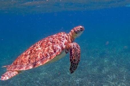 7 дни Тропически Кариби с Белиз и Хондурас
