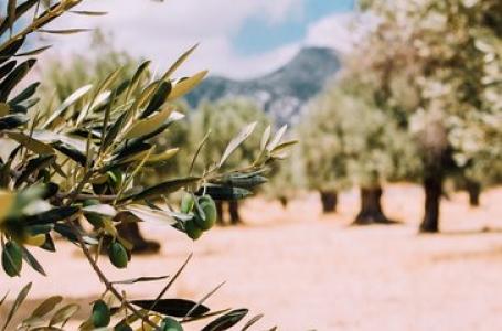 7 дни Симфония от слънце, маслини и море