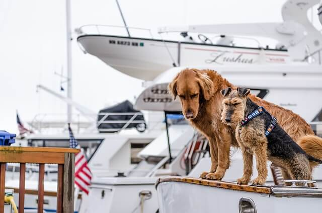Кучета на борда