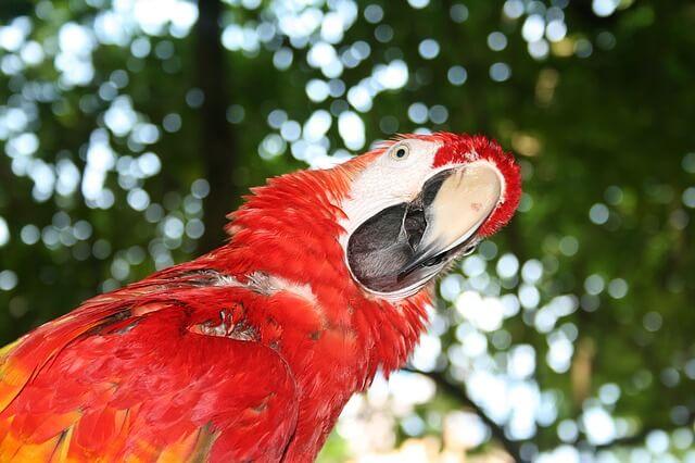 Папагал в Ямайка