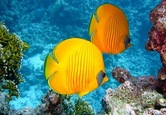 Underwater Beliz